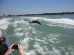 Little Toot Dolphin Tour 2