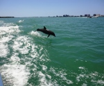 Little Toot Dolphin Tour